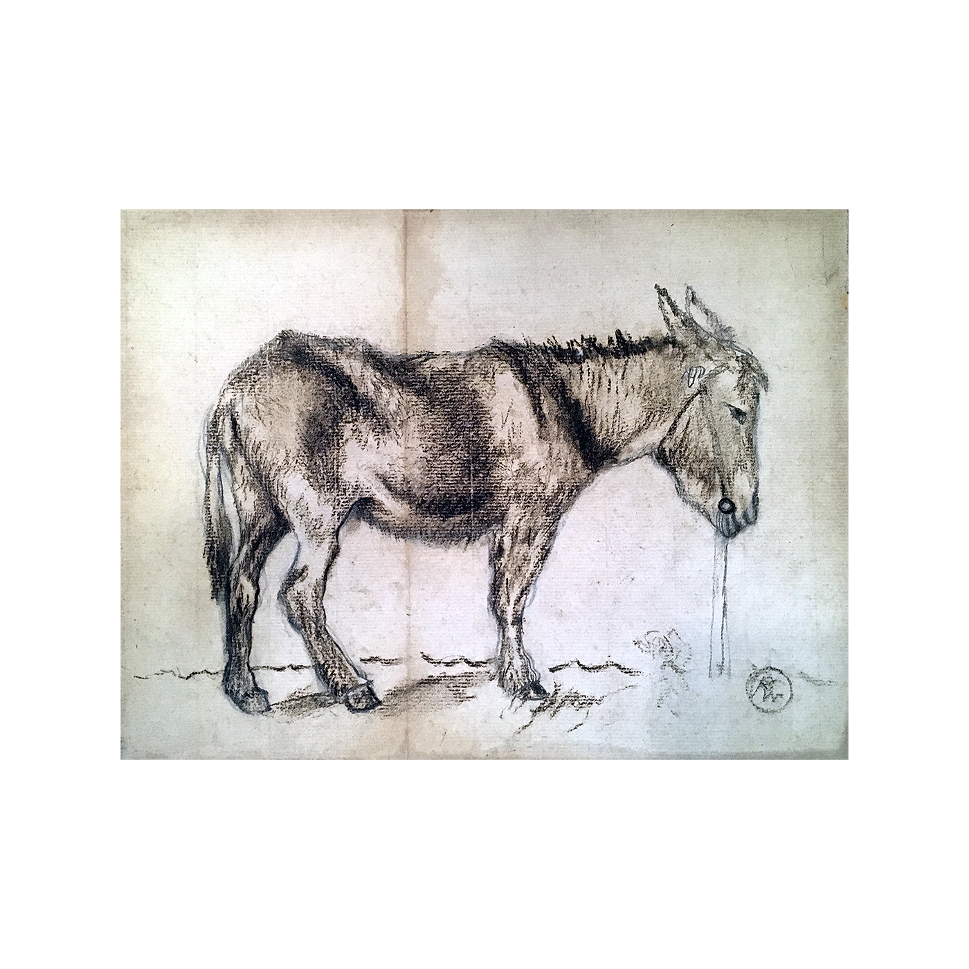 American or South American drawing : The burro, early 20th-century.