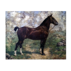 [unattributed] : Portrait of a horse, ca.1890s.